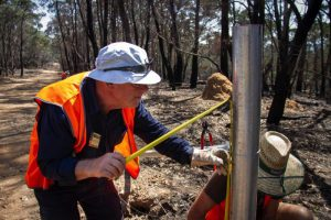 volunteer mending fence in fire-ravaged area